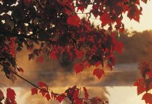 fall foliage photo