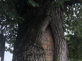 Gurad tree on Beacon Hill